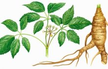 Ginsengul, o plantă, sute de beneficii