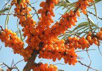 Remedii din natură pentru astenia de primăvară