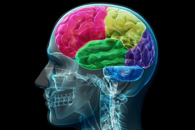 Ce efect uimitor poate avea estrogenul asupra creierului