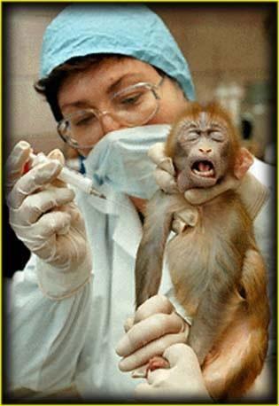 Vești bune pentru iubitorii de animale: UE interzice cosmeticele cu ingrediente testate pe animale