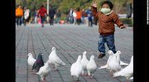 Este noul virus H7N9 o amenințare pentru toată omenirea? Există dovezi că se transmite de la om la om