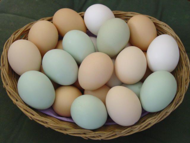 La ce să fiți atenți când cumpărați ouă. Detaliile de pe coajă dezvăluie prospețimea și calitatea