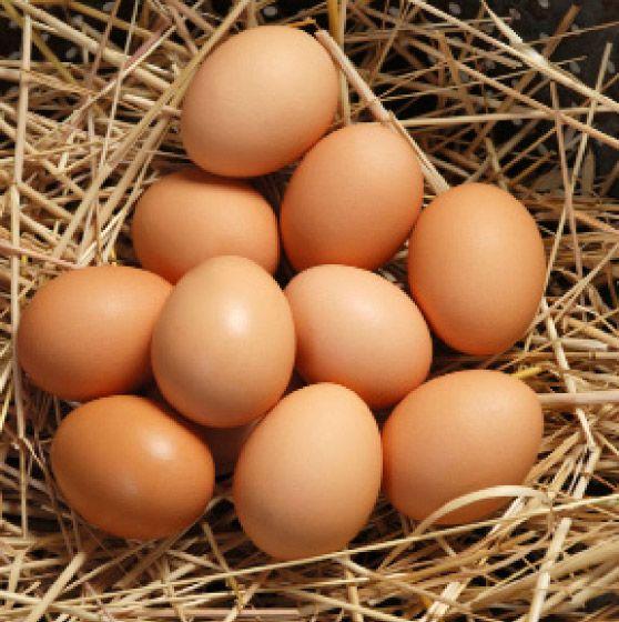 Ce infecții ar putea trata ouăle de găină! Pot ține locul antibioticelor