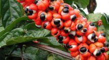 Cele mai eficiente metode naturiste care ajută la slăbit