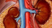 Consecinţele ignorării afecţiunilor renale sunt extrem de grave. Iată cum se manifestă şi care sunt factorii de risc