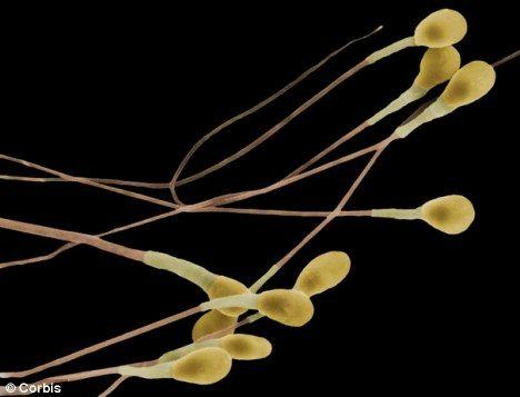Ce trebuie să facă bărbaţii în fiecare noapte pentru a-şi creşte calitatea spermei