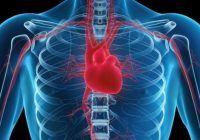 O nouă descoperire a cercetătorilor. Au aflat secretul diviziunii celulelor inimii