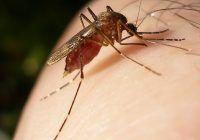 Ce boli periculoase aduc temperaturile crescute