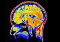 Mituri despre creier. Tu știai aceste lucruri?