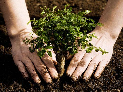 Pacienţii cu Talasemie din România au atras atenţia asupra problemelor cu care se confruntă plantând copaci