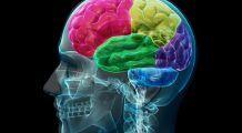 Combustibilul care hrănește creierul  și ține memoria în priză