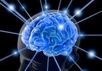 """Super-fructele de sezon. Mențin creierul în formă până la vârste înaintate și """"programează"""" celulele canceroase să se autodistrugă"""