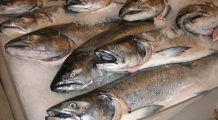 Pește stricat și expirat vândut în marile lanțuri de magazine din București! Alertă alimentară