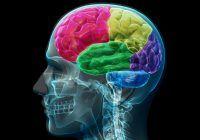 Alimentul la îndemână care împiedică îmbătrânirea creierului. A fost dovedit științific că previne Alzheimerul