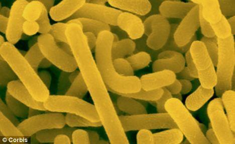 Cum ne influenţează bacteriile din intestine greutatea corporală şi riscul de boli