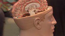 Ce să mânânci ca să ai un creier sănătos?