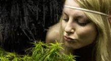 Ce efect are marijuana asupra tumorilor canceroase. Medicii sunt uimiți