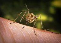 A făcut meningită din cauza unei înţepături de ţânţar