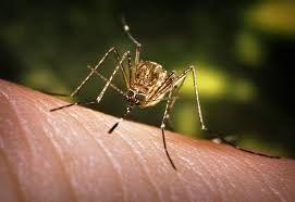 Cele mai bune metode să țineți țânțarii la distanță
