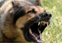 Aproape zece mii de persoane au fost muşcate de câini de la începutul anului până acum
