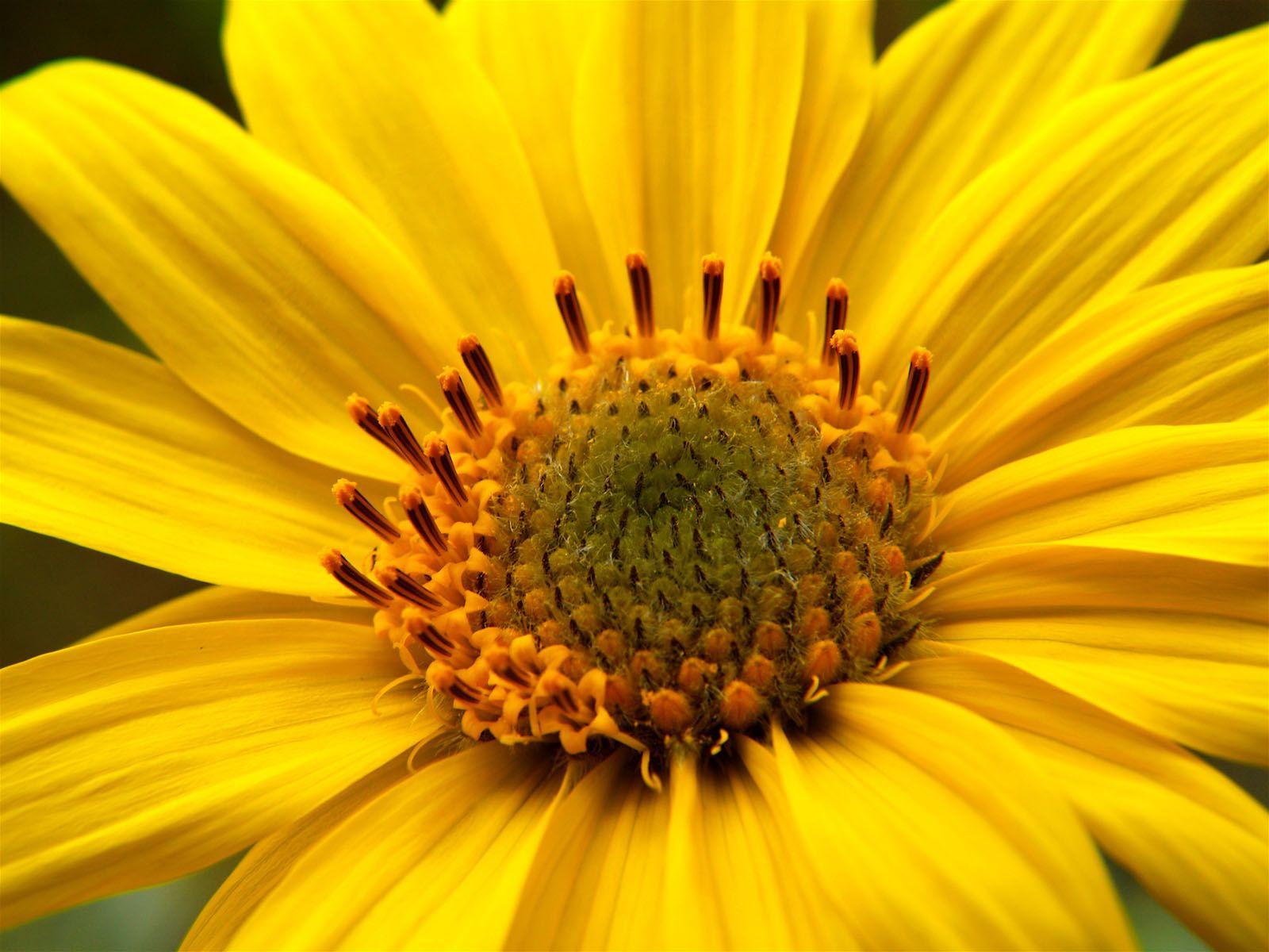 Cele mai eficiente remedii naturiste pentru artrită