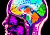 Super-alimentul care poate întineri creierul cu 11 ani