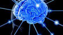 Cea mai bună hrană pentru creier. Alimentul-medicament care previne demența