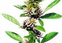 Planta care ajută la combaterea celei mai letale forme de cancer