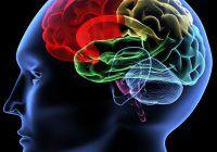 creier, poluare, efecte nocive pentru organism