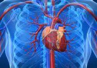 Ce trebuie să mâncați de două ori pe săptămână ca să preveniți bolile de inimă