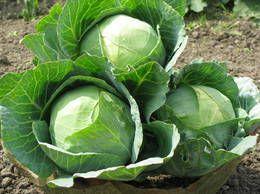 Cele mai sănătoase patru legume verzi