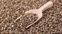 Semințele de cânepă tratează dereglările hormonale