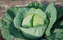 Cele mai bune 4 legume pentru sănătatea ta