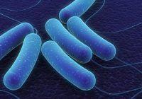 Bacterie periculoasă care a pus Europa pe jar! Spania a emis alertă sanitară alimentară, MAE avertizare de călătorie pentru români