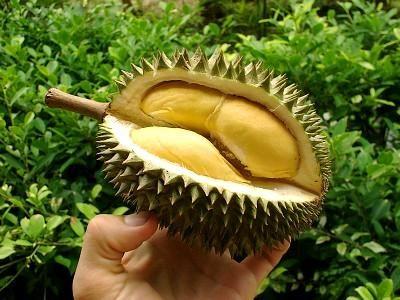 DURIAN, fructul urât mirositor în care se ascunde o adevărată COMOARĂ