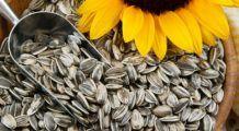 Trei beneficii nebănuite ale semințelor de floarea-soarelui