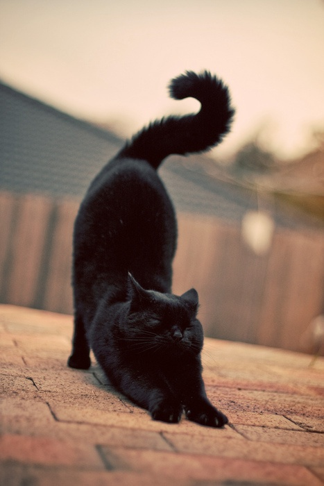 stretching3
