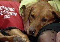 Câinii pot detecta cancerul mai eficient decât orice test