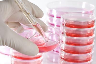 Telocitele pot participa la regenerarea hepatică și la formarea de vase de sânge după infarct