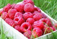 Un fruct de sezon ține la distanță cancerul și previne îmbătrânirea
