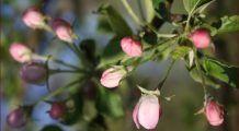 Terapia cu celule stem vegetale, noul elixir al tinereții