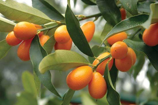 Fructul-minune care combate cancerul de prostată și bolile de inimă