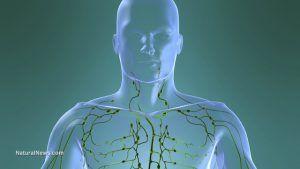Sistemul limfatic distruge virusurile si elimina toxinele din organism. Ce sa faci ca sa funcționeze la capacitate maxima?