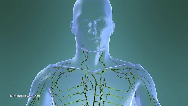 Sistemul limfatic distruge virusurile și elimină toxinele din organism. Ce să faci ca să funcționeze la capacitate maximă?