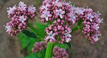 Topul plantelor care ajută la prevenirea bolilor de inimă și a diabetului
