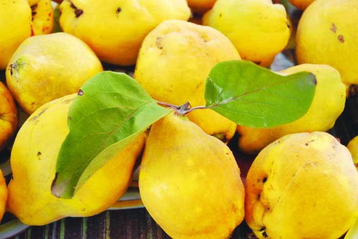 Leacul minune al toamnei. 100 de beneficii într-un singur fruct