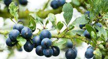 Cele mai sănătoase fructe de sezon. Întăresc sistemul imunitar și țin la distanță bolile digestive