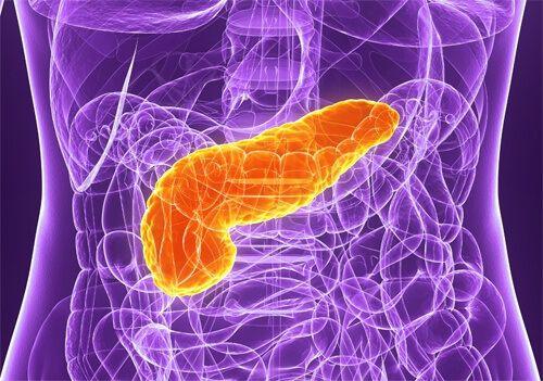 Pancreasul este a doua glandă ca mărime din sistemul digestiv, având o formă plată şi alungită, 12-15 centimetri lungime şi o greutate între 70 şi 110 g. Este situat în cavitatea abdominală, între duoden şi splină