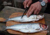 Cel mai sănătos pește. Previne atacul de cord mai eficient decât medicamentele