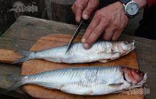 Cel mai sănătos pește. Este plin de vitamine și poate preveni infarctul
